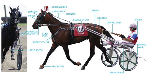 harness racing horse trotter pennsylvania saddle overcheck cloth bike driving famous pole bell knee whip bits tack check crupper head