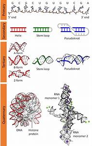 Why Is Dna Much More Popular In The Media Than Rna  When