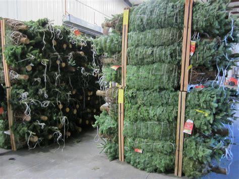 christmas tree at home depot christmas trees home depot idolproject me 6160