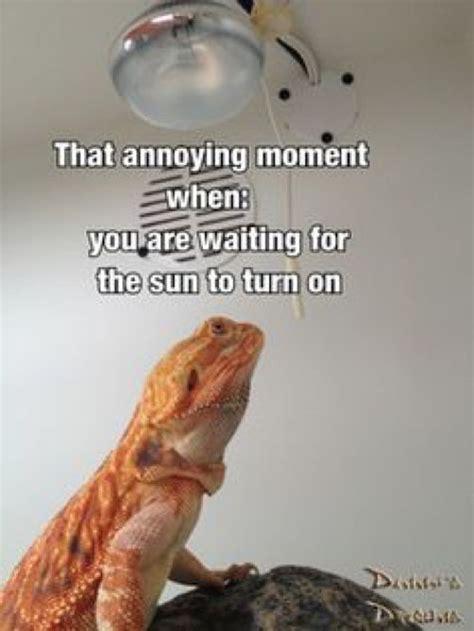 Bearded Dragon Memes - best 25 bearded dragon funny ideas on pinterest snek