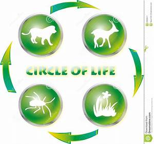 Circle Of Life Stock Image