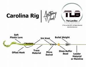 Carolina Rig Diagram