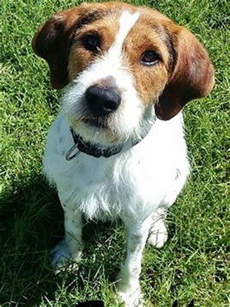 dog  adoption scruffy  maine peoplecom