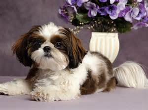 small mixed breed dogs to download non shedding small