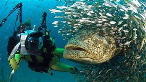 Best Place To Scuba Dive - 25 best places to go scuba diving travelogue scuba
