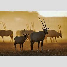 Desert Watch 'voluntourism' At The Dubai Desert Conservation Reserve  Writing To Inform