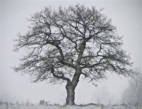 Fabulous Winter Stock Image Cold Overcast