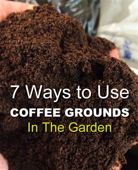 Coffee is an environmentally friendly way to repel unwanted insects and animals in the garden. 7 Coffee Ground Garden Hacks That Will Turn Your Thumb Green