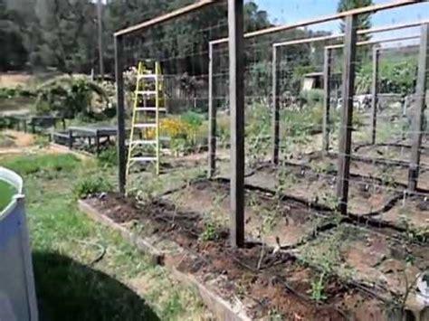 tomato trellis system  youtube