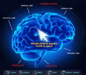 Human Brain Functions Map