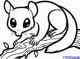 Glider Sugar Coloring Nocturnal Draw Possum Animals Drawing Colouring Clipart Dragoart Sheets Step Animal Aboriginal Gliders Printable Australian Drawings Ringtail sketch template