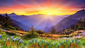 awesome, sunset, sun, rays, forested, mountains, , beautiful, mountain, flowers, with, green, grass, desktop
