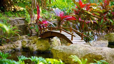 sunken gardens st petersburg sunken gardens in st petersburg florida expedia