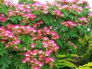 Petit Arbre Persistant : arbre fleuri persistant salon expertscnes ~ Melissatoandfro.com Idées de Décoration
