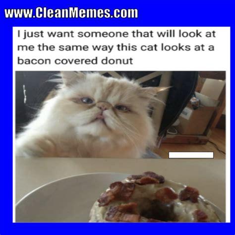Funny Cat Memes Clean - cat memes clean memes the best the most online