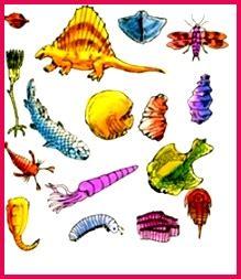 class  notes biology diversity  animals mcqs