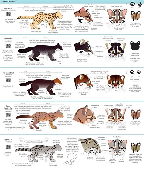 drawing illustration cats feline art reference   draw