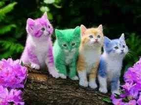 sign someone up for cat facts 50 amazing facts about cats that you might not