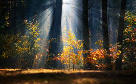 breathtaking forest photography phowd