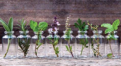 kräuter richtig pflanzen 10 kr 195 164 uter die im wasser aufziehen kann und die ein ganzes jahr lang im haus bl 195 188 hen