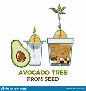 Avocado Tree Vector Growing Guide Poster  Green Simple