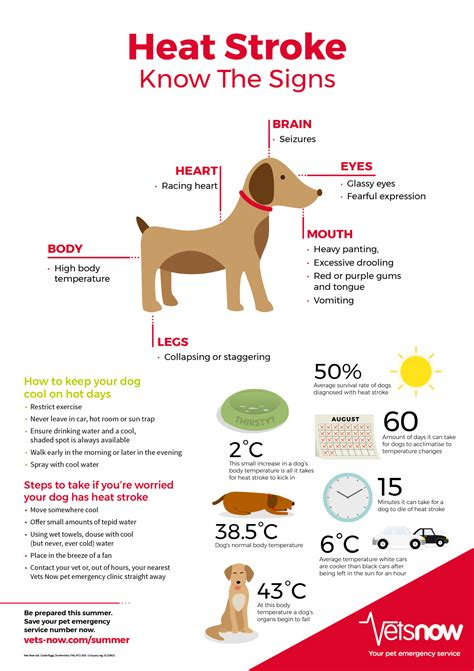 infographic   main signs  heat stroke  dogs