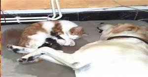 Dog Giving Birth To Cat | www.imgkid.com - The Image Kid ...