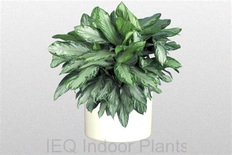 best small indoor plants low light best office plants small low maintenance office plants