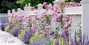 Garten Im Mai : aldi s d gartenkalender mai ~ Markanthonyermac.com Haus und Dekorationen