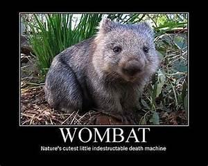 17 Best ideas about Cute Wombat on Pinterest | Wombat ...
