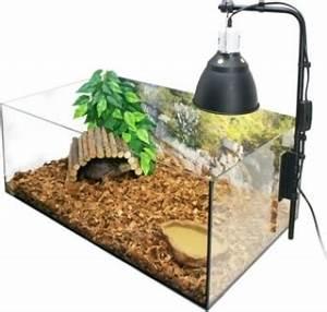 Acheter Terrarium Plante : questions sur kit complet terrarium naturel pour tortue de terre ~ Teatrodelosmanantiales.com Idées de Décoration