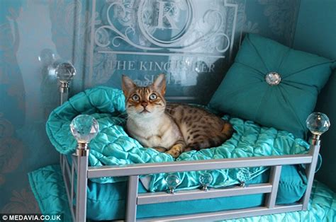 Inside The Ings Luxury Cat Hotel Costing Owners Up To £60