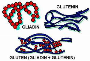 All About Gluten