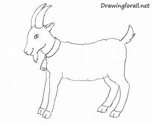 How to Draw a Goat for Beginners | DrawingForAll.net