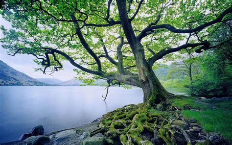 Beautiful Tree Wallpaper For Desktop by Free Wallpaper Most Beautiful Trees Wallpapersafari