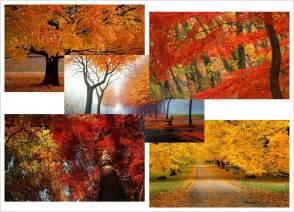 Windows 7 Desktop Themes Autumn