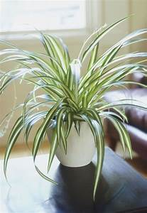 Indoor Hanging Plants Low Light Five Pet Safe Houseplants For Spring Leaf And Paw