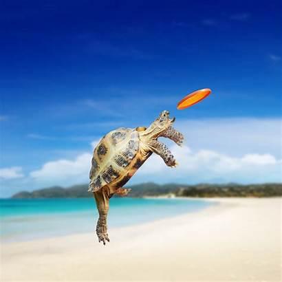 Turtle Wallpapers Sea Frisbee Tortoise Trying Bing