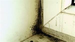Feuchtigkeit In Wänden : schimmel vorbeugen und bek mpfen ratgeber verbraucher ~ Sanjose-hotels-ca.com Haus und Dekorationen