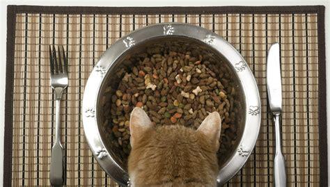 Katze Riecht Am Futter Aber Frisst Nicht