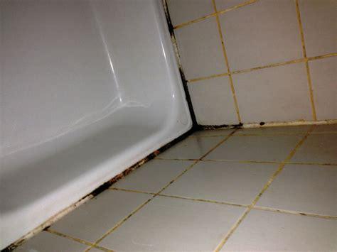 Schimmel Im Bad? Die Richtige Schimmelbeseitigung Zum