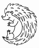 Hedgehog Coloring Colouring Rolling Hedgehogs Sheets Bulkcolor Bulk Cricut Template sketch template