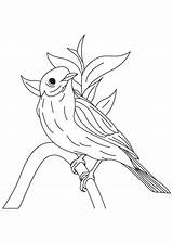 Coloring Bluebird Pages Western Eastern Bird Birds Printable Cartoon Designlooter Drawings Recommended Popular Coloringhome 47kb 860px sketch template