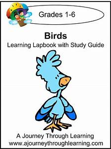 Birds Lapbook With Study Guide For Foundations