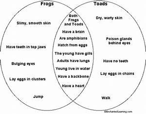 12 Frog And Toad Venn Diagram Answers  Frog Answers Venn