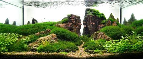 Aquascape Plants List by Aquascaping Planted Tank Nature Aquarium Note I Am
