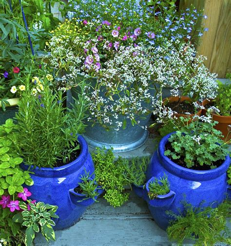 How To Get Sarted Growing Herbs In Pots