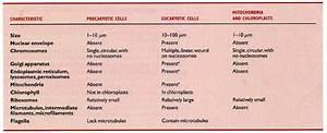 U0026quot Eukaryotic  U0026 Prokaryotic Cell Anatomy U0026quot