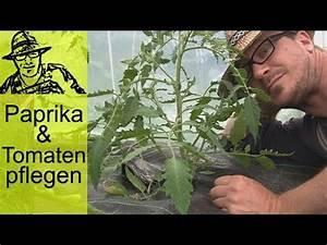 Rasenlüfter Selber Bauen : stecklinge von tomaten bewurzeln im wasser ganz schnel ~ Lizthompson.info Haus und Dekorationen