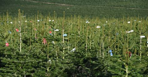where can i buy real and artificial christmas trees in